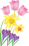 Spring flowers. An illustration of some spring flowers,including tulips,daffodils,and crocus Stock Photography