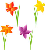 Spring Flowers  Illustrations, Daffodil Illustrations. Isolated spring daffodil flowers illustrations ,   red flower, purple flower, plants, flora, nature Stock Photos
