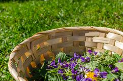 Free Spring Flowers In A Basket Detail Stock Images - 105402734