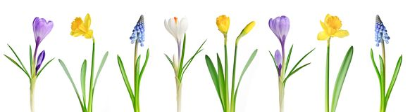 Free Spring Flowers In A Row Royalty Free Stock Images - 13799349
