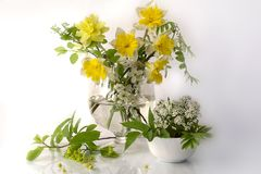 Free Spring Flowers In Still Lifes. Royalty Free Stock Photo - 110616735