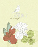 Spring flowers. Iris flower Royalty Free Stock Image