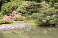 Spring flowers in Japanese garden. Beautiful flowers and a pond in Seattle Japanese garden Stock Image
