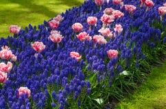 Spring flowers in Keukenhof garden Royalty Free Stock Photography