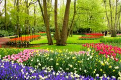 Spring flowers, Keukenhof Gardens Stock Photo