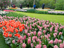 Spring flowers in Keukenhof, Holland Royalty Free Stock Photos