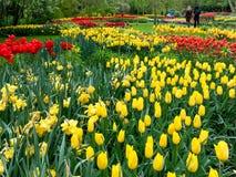 Spring flowers in Keukenhof Park, Netherlands Royalty Free Stock Photography