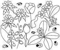 Spring flowers and ladybirds set  illustration Royalty Free Stock Image
