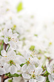 Spring flowers on light  background Stock Photos