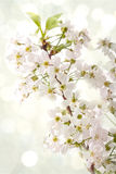 Spring flowers on light boheh background Stock Photos