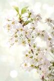 Spring flowers on light boheh background Stock Photos