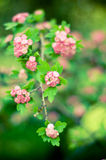 Spring flowers like a picture Royalty Free Stock Photos