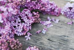 Spring flowers. Lilac flowers Frame on Rustic Textured Gray wooden background. Top view, flat lay stock photography