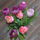 Tulip, tulips, flower, spring, pink, bouquet, flowers, isolated, white, nature, floral, purple, bunch, green, blossom, bloom, beau Royalty Free Stock Photography
