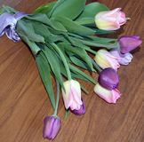 Tulip, tulips, flower, spring, pink, bouquet, flowers, , white, nature, floral, purple, bunch, green, blossom, bloom, beau Royalty Free Stock Photos
