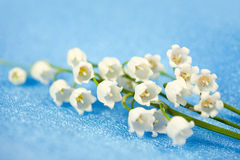 Spring flowers lily of the valley Royalty Free Stock Photo