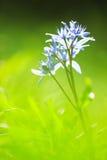 Spring flowers macro Stock Photos