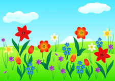 Spring flowers in the meadow Royalty Free Stock Photography