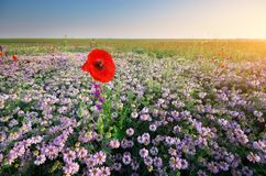 Spring flowers in meadow. royalty free stock images