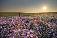 Spring flowers  in meadow. Stock Photography