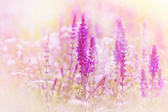 Spring flowers in meadow Stock Images