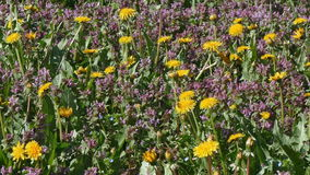 Spring flowers at meadow stock footage