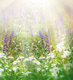 Spring flowers in meadow Stock Photography