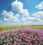 Spring flowers in meadow royalty free stock photo