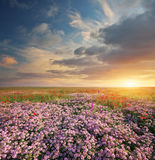 Spring flowers  in meadow. Stock Photos
