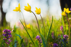 Spring flowers on the meadow. Stock Photos