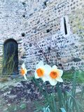 Spring, flowers, and medieval building. Spring, flowers, medieval building and door, bright colours, uniqueness, distinctiveness, beauty, purity, individuality stock photos