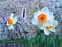 Spring, flowers, and medieval building. Spring, flowers, medieval building and wall, bright colours, uniqueness, distinctiveness, beauty, purity, individuality stock photo