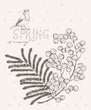 Spring flowers. Mimosa. Greeting Card for March 8. Poster with flowering plants in doodle vintage style. Royalty Free Stock Images