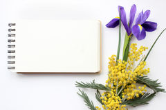 Spring flowers Mimosa and Iris Mockup. Post blog social media. Stock Images