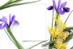 Spring flowers Mimosa and Iris Mockup. Post blog social media. Royalty Free Stock Images