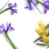 Spring flowers Mimosa and Iris Product Mockup. Royalty Free Stock Photo