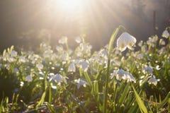 Spring flowers in morning light stock image