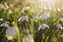 Spring flowers in morning light stock photo