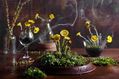 Spring flowers with moss and water drops Stock Images