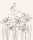 Spring flowers. Narcissus. Greeting Card for March 8. Poster with flowering plants in doodle vintage style. Stock Photo