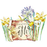 Spring flowers narcissus. Isolated on white background. Watercolor hand drawn illustration. Easter design. Lettering - vector illustration