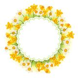 Spring flowers narcissus natural background Royalty Free Stock Images