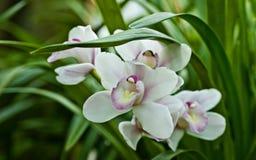 Spring flowers. Stock Photos
