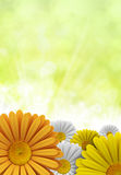 Spring flowers - nature background Royalty Free Stock Photography