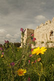 Spring flowers near the ruins Royalty Free Stock Images