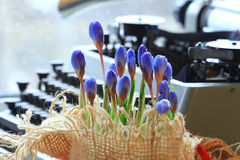 Spring flowers near the typewriter Stock Photography