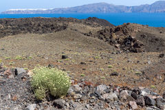 Spring flowers near volcano in Nea Kameni island and panorama to Santorini, Greece Stock Images