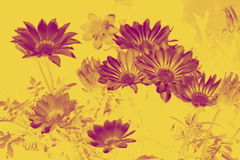 Spring flowers. Nice spring flowers on the light background Stock Photos