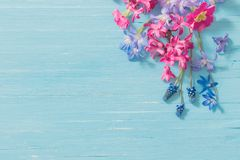 flowers on old blue wooden background stock photo