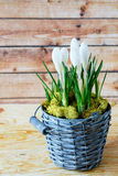 Spring flowers in an old bucket Stock Photo
